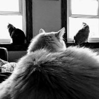 Agency Cats